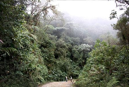 Området till vänster ingår i den skog som Rädda Regnskog hjälper till att köpa och bevara.