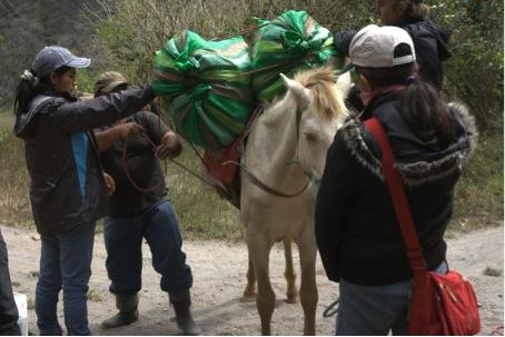 MS_packning av hästar